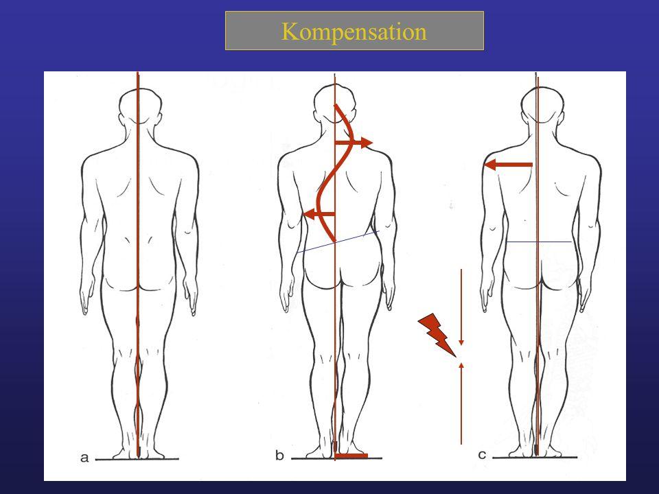 Funktionelle Einflüsse auf das Kniegelenk und - ppt video online ...