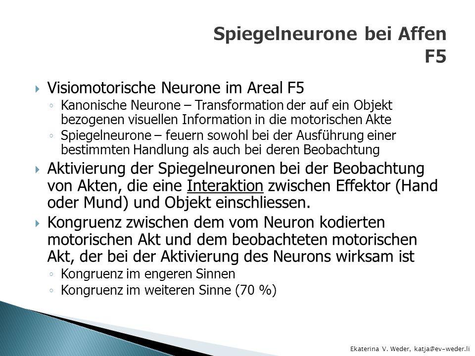 The mirror-neuron System - ppt herunterladen