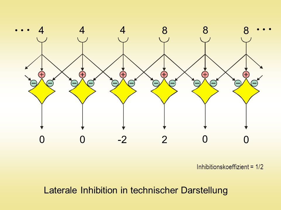 4 8 -2 2 Laterale Inhibition in technischer Darstellung
