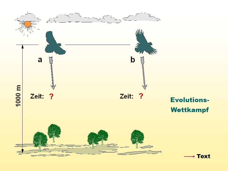 Evolutions- Wettkampf Text