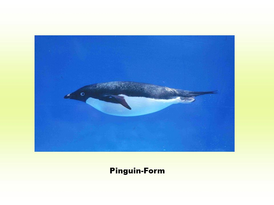 Pinguin-Form