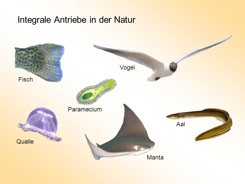Integrale Antriebe in der Natur