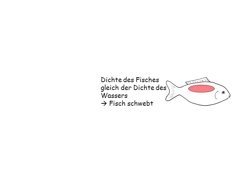 Schwimmen und Schweben Dichte und Schwimmblase - ppt video online ...