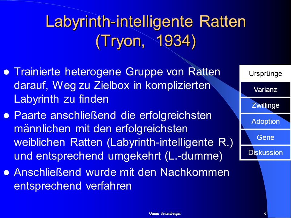 Labyrinth-intelligente Ratten (Tryon, 1934)