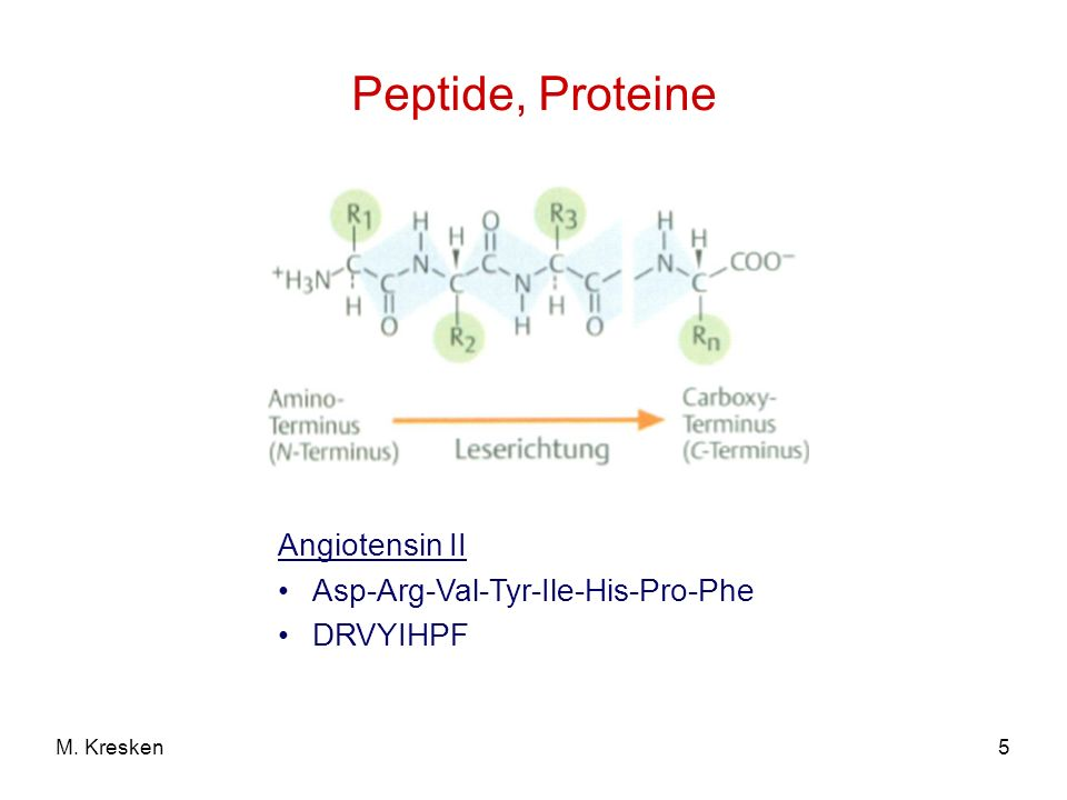 Peptide, Proteine Angiotensin II Asp-Arg-Val-Tyr-Ile-His-Pro-Phe