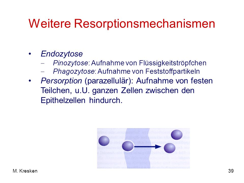 Weitere Resorptionsmechanismen