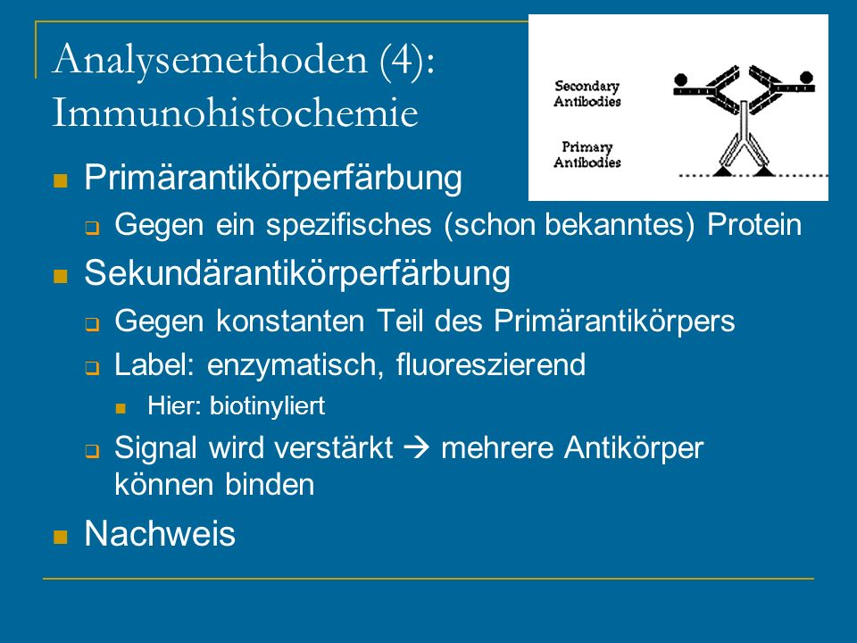 Analysemethoden (4): Immunohistochemie
