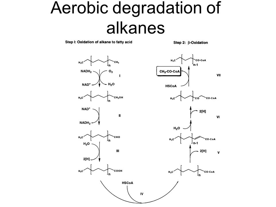 Aerobic degradation of alkanes
