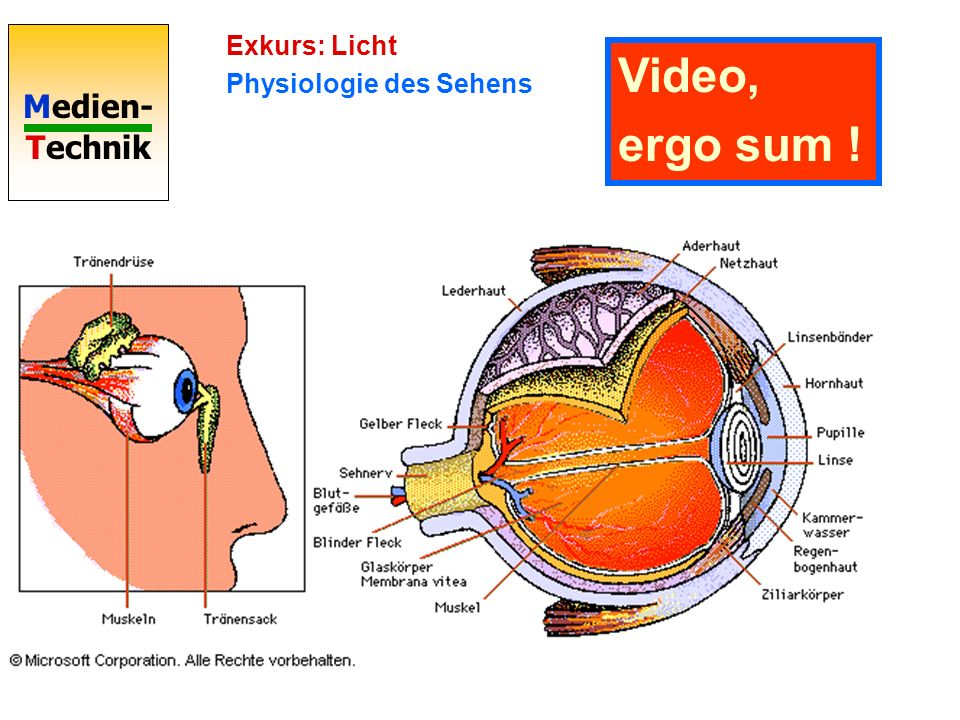 Exkurs: Licht Physiologie des Sehens Video, ergo sum !