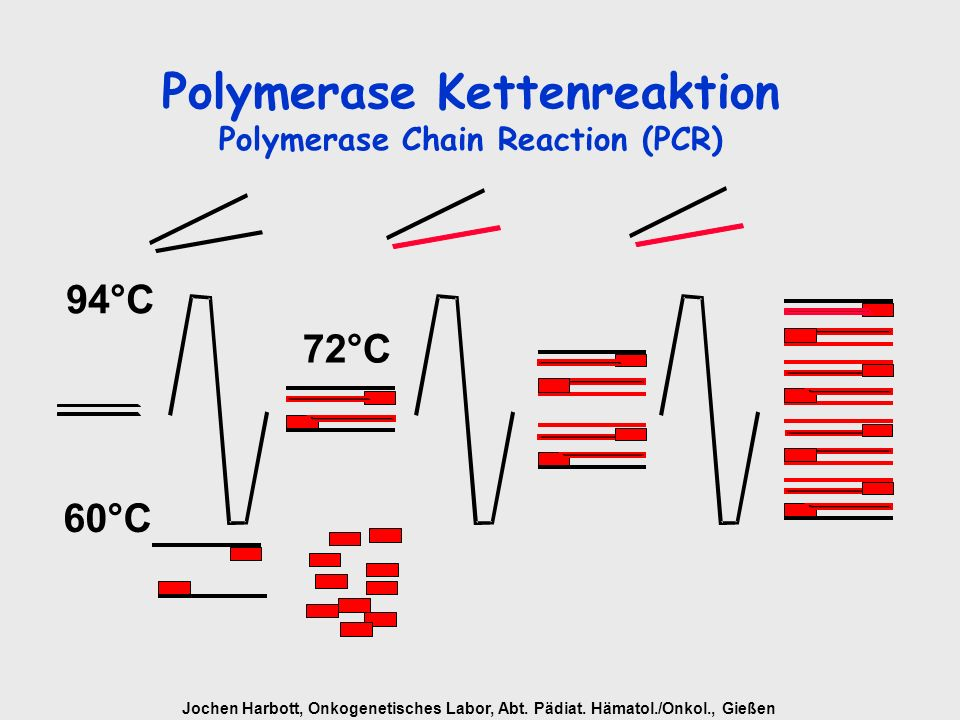 Polymerase Kettenreaktion Polymerase Chain Reaction (PCR)