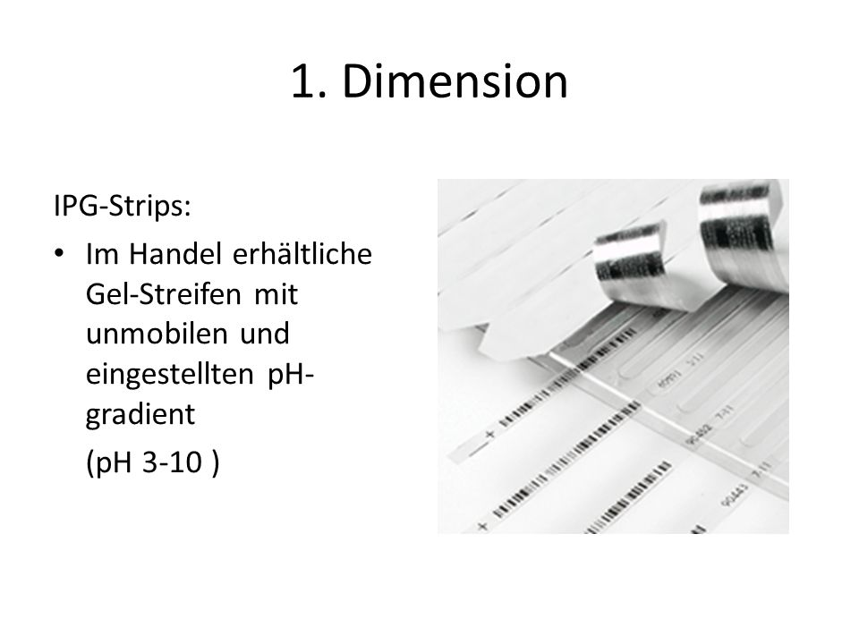 1. Dimension IPG-Strips: