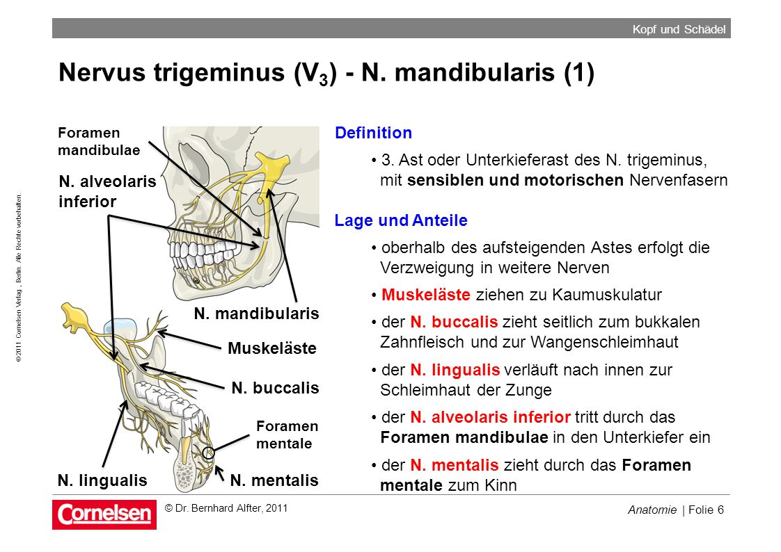 Nervus trigeminus (V) N. ophthalmicus Ganglion trigeminale ...
