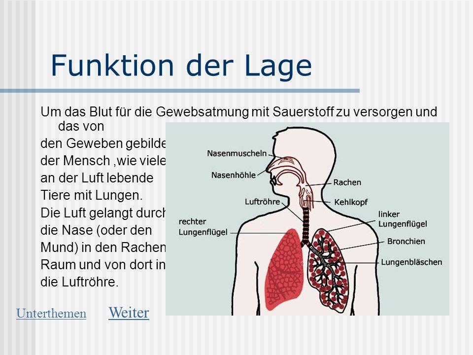 Charmant Rachen Funktion Galerie - Anatomie Von Menschlichen ...