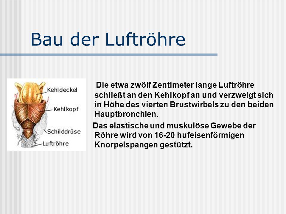 Die Atmungsorgane. - ppt video online herunterladen
