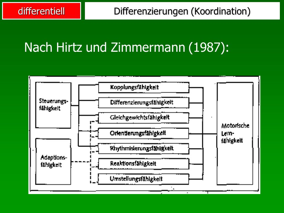 Differenzierungen (Koordination)