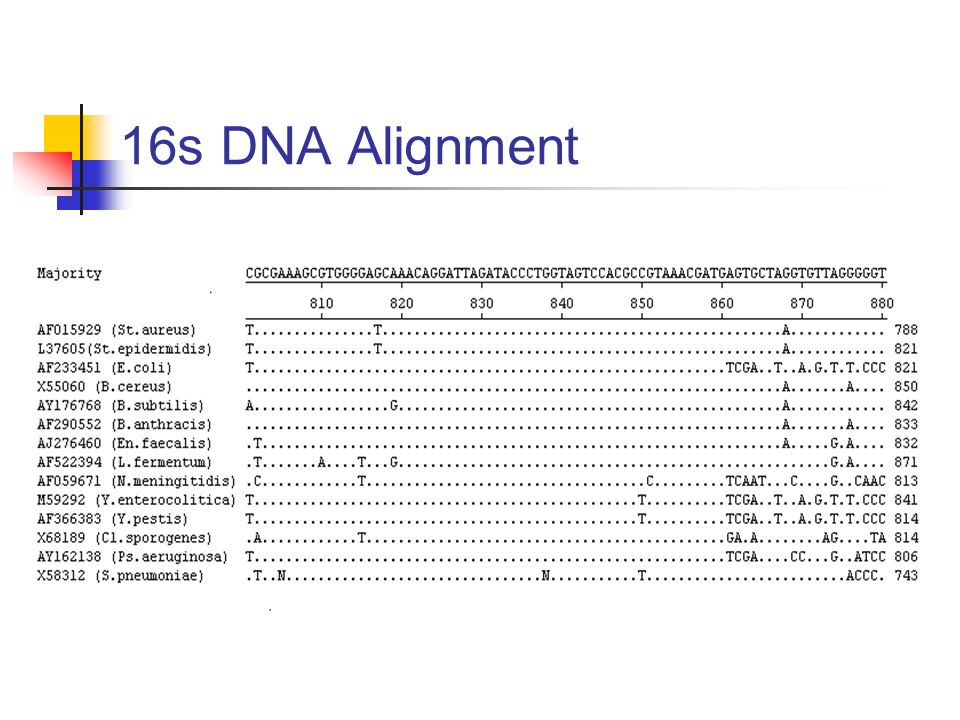 16s DNA Alignment