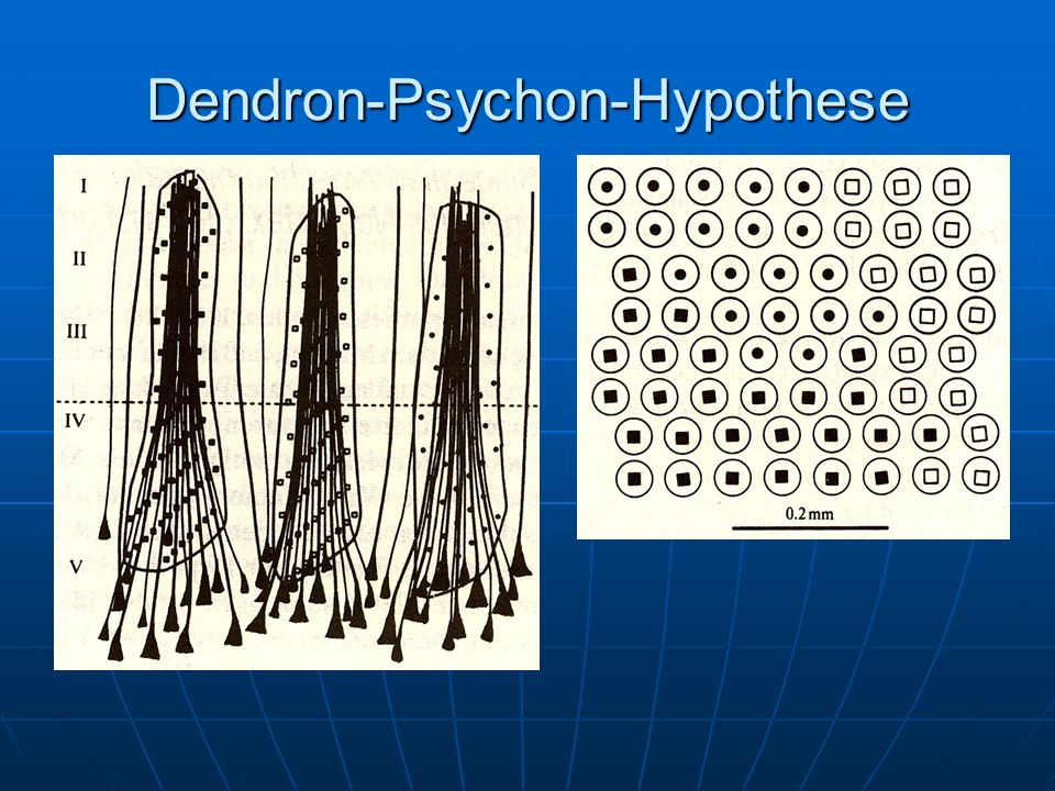 Dendron-Psychon-Hypothese