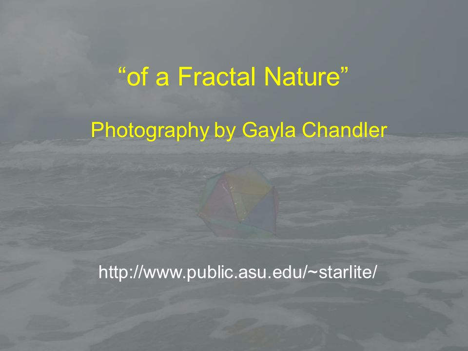 of a Fractal Nature Photography by Gayla Chandler