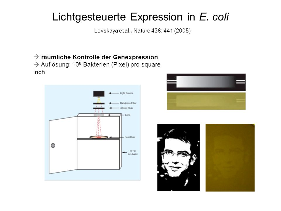 Lichtgesteuerte Expression in E. coli