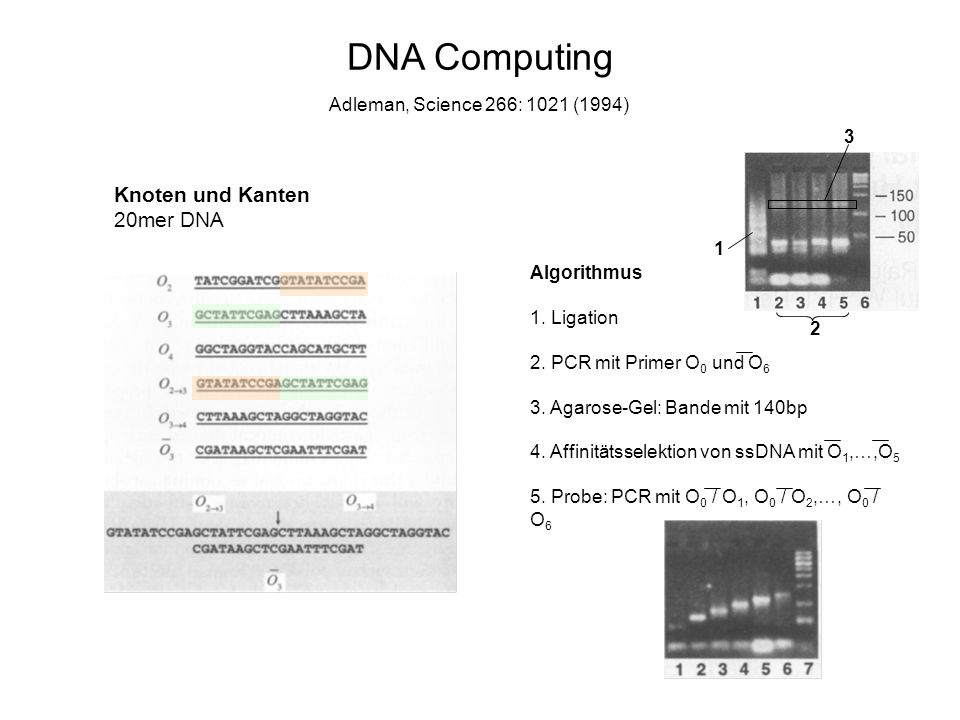 DNA Computing Knoten und Kanten 20mer DNA