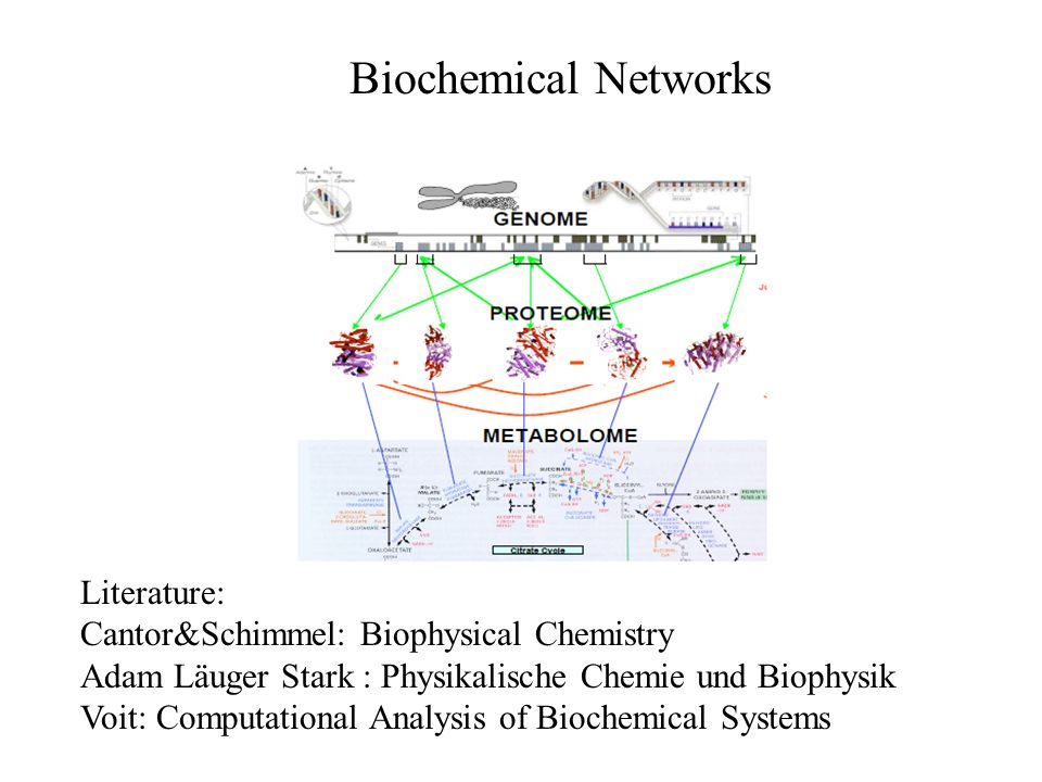 Biochemical Networks Literature: