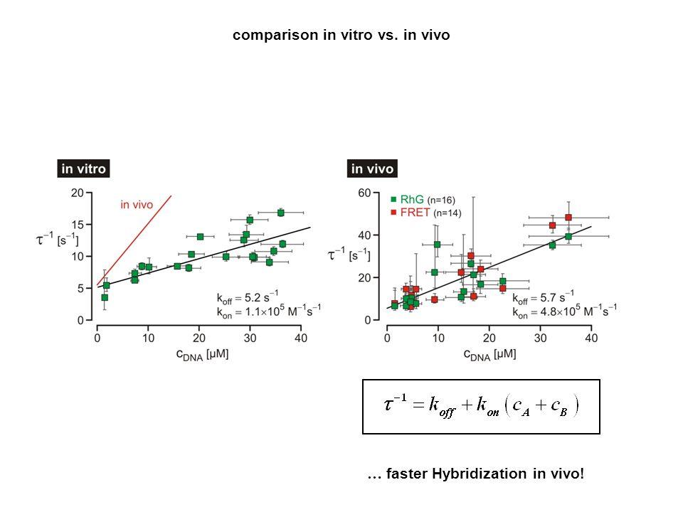 comparison in vitro vs. in vivo