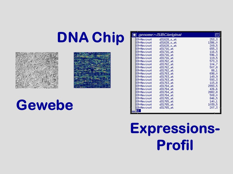 DNA Chip Gewebe Expressions- Profil