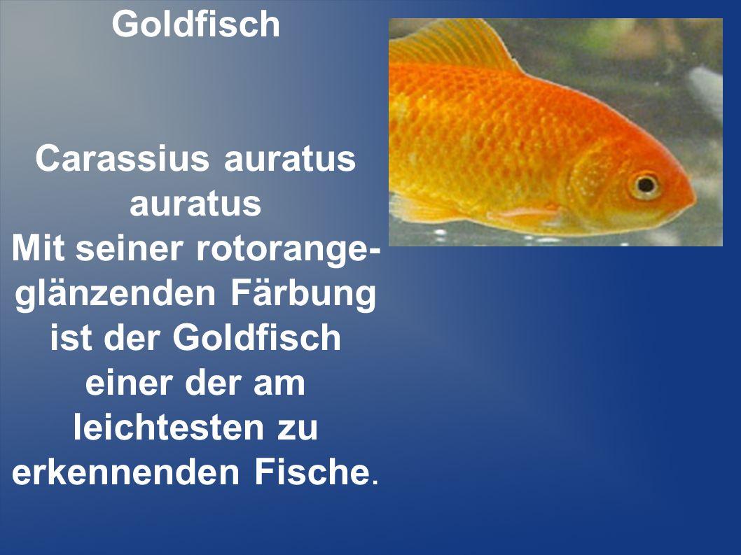 Fische. - ppt herunterladen