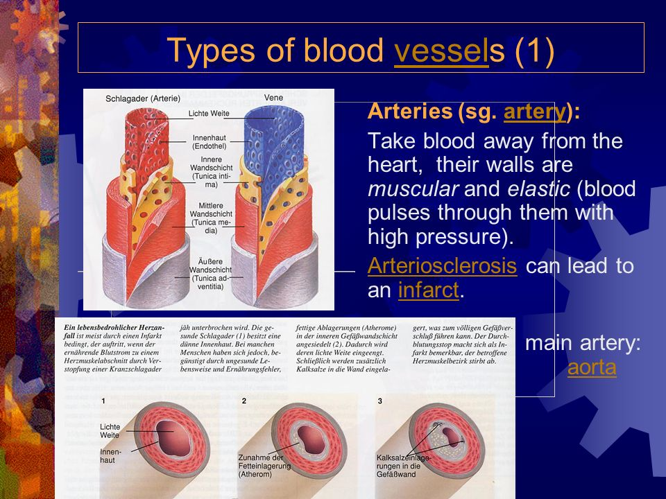 Types of blood vessels (1)