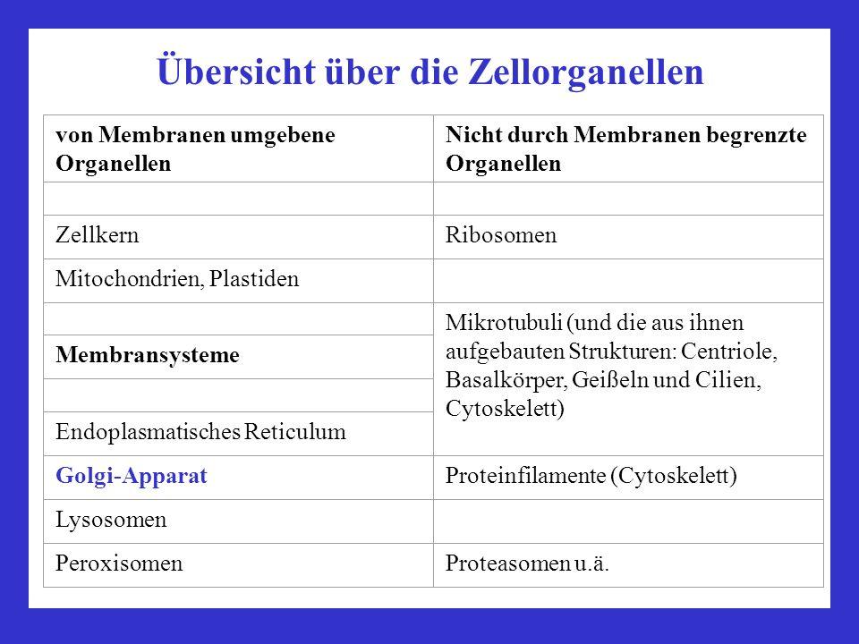 vorlesung zellbiologie teil biologie