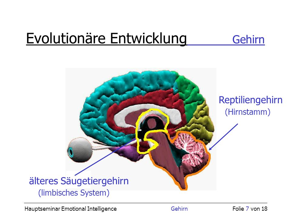 Hauptseminar 'Emotionale Intelligenz\' - ppt video online herunterladen