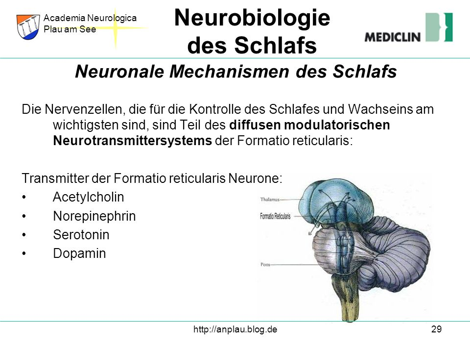 Neuronale Mechanismen des Schlafs