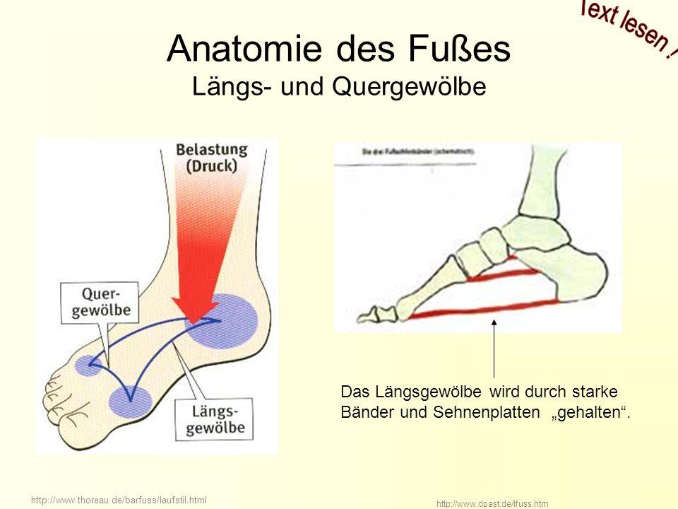 Großzügig Anatomie Fuß Zeitgenössisch - Anatomie Von Menschlichen ...