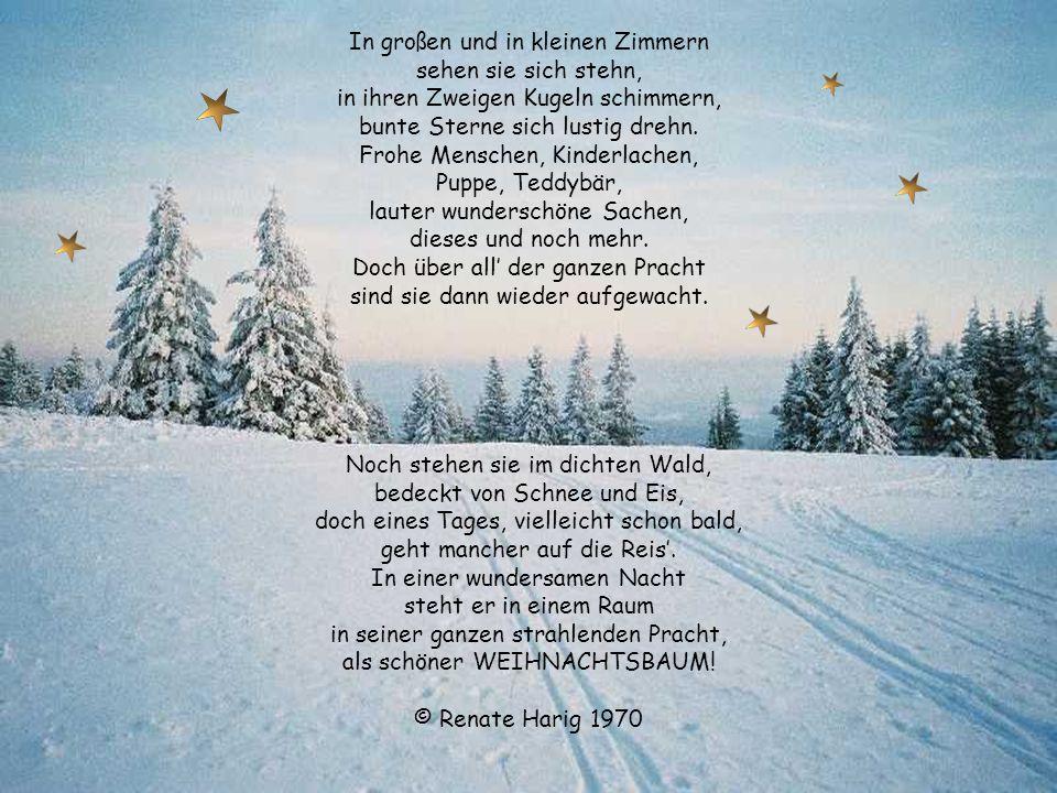 Gedicht der weihnachtsbaum strahlend