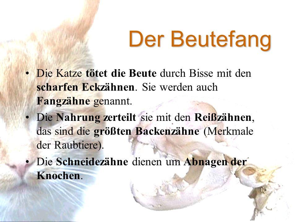 Beste Katze Zähne Anatomie Ideen - Anatomie Ideen - finotti.info