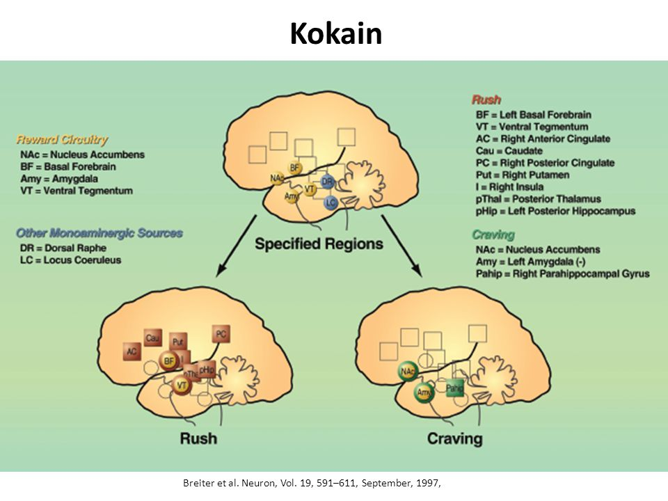 Kokain Breiter et al. Neuron, Vol. 19, 591–611, September, 1997,