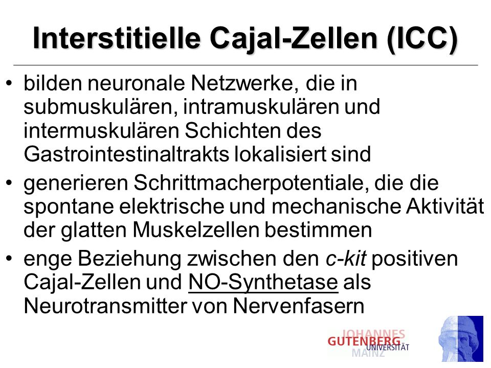 Interstitielle Cajal-Zellen (ICC)