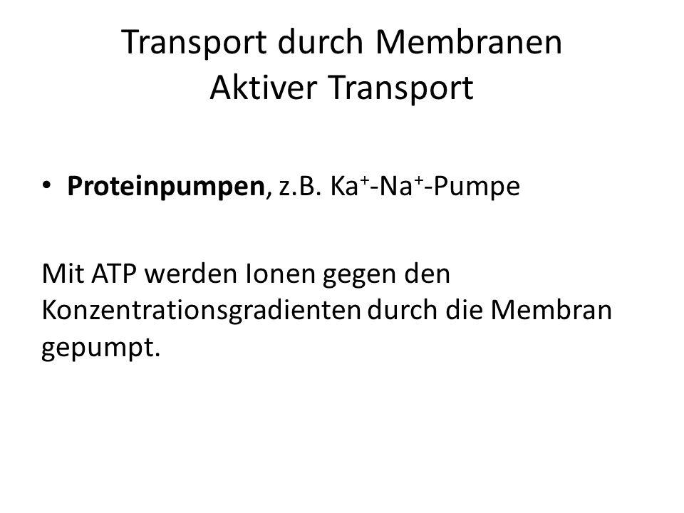 Transport durch Membranen - ppt video online herunterladen