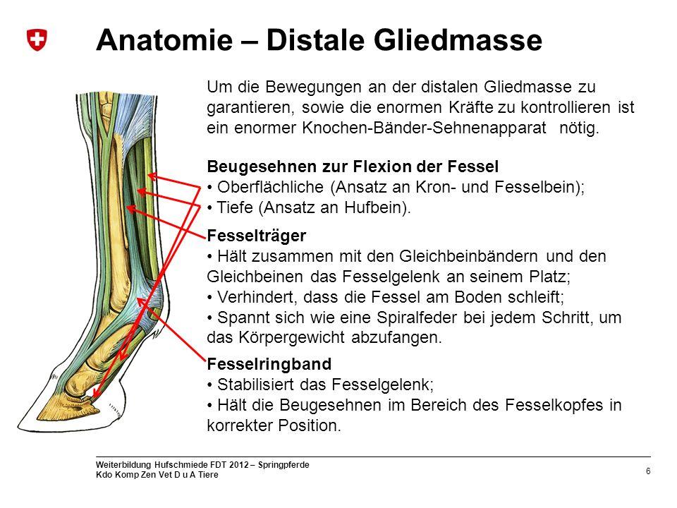 Niedlich Pferde Fessel Anatomie Zeitgenössisch - Anatomie Ideen ...