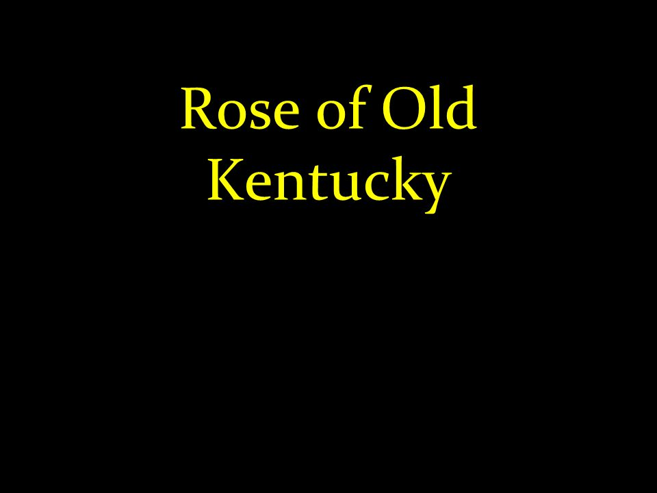 Rose of Old Kentucky