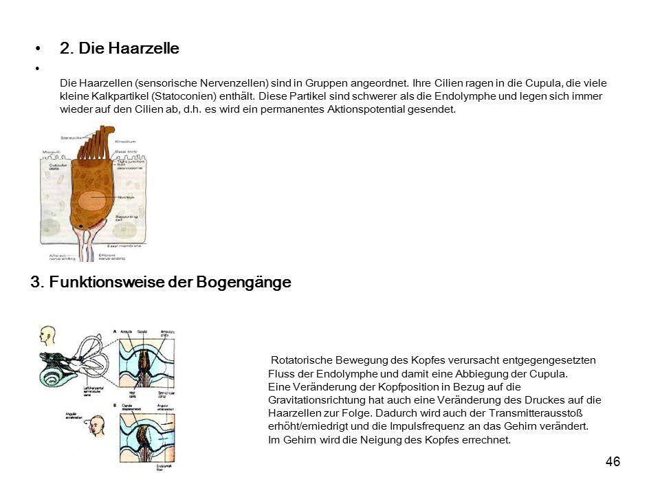 Fantastisch Anatomie Der Bogengänge Galerie - Anatomie Ideen ...