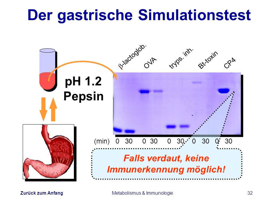Der gastrische Simulationstest