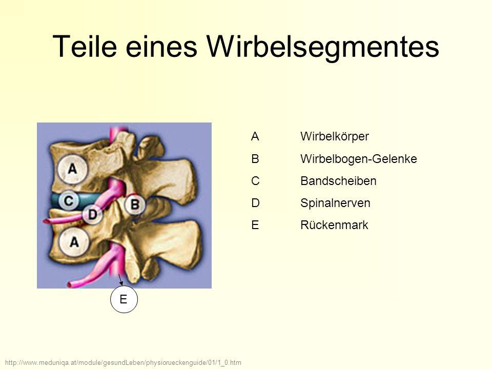 Die Wirbelsäule Anleitung zur Präsentation - ppt herunterladen
