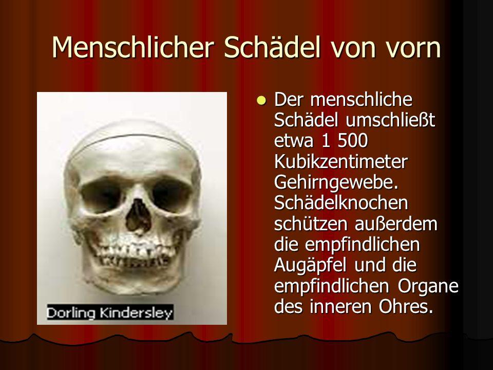 Skelett. - ppt video online herunterladen