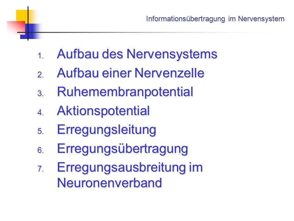 Informationsübertragung im Nervensystem - ppt herunterladen