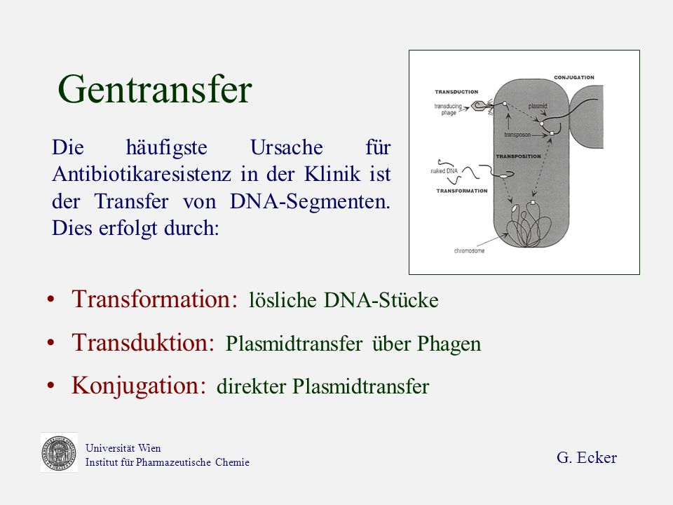 Gentransfer Transformation: lösliche DNA-Stücke