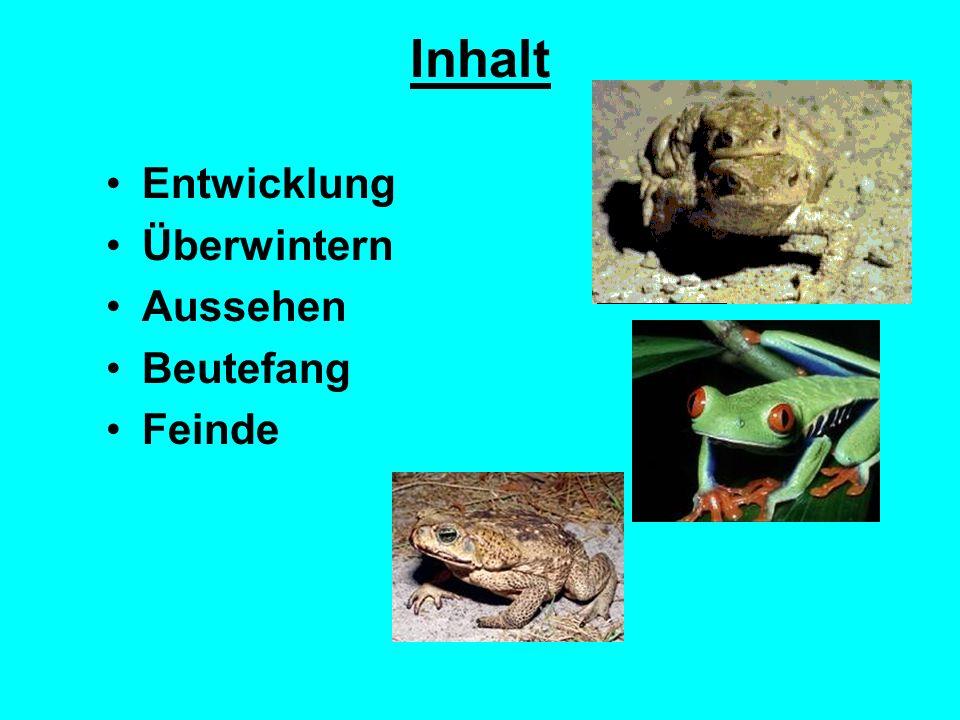 Lieblings Der Frosch springende Fortbewegung große Bedeutung im Ökosystem &WE_18