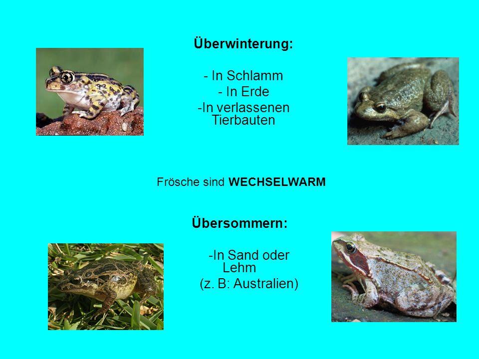 Außergewöhnlich Der Frosch springende Fortbewegung große Bedeutung im Ökosystem &AN_97