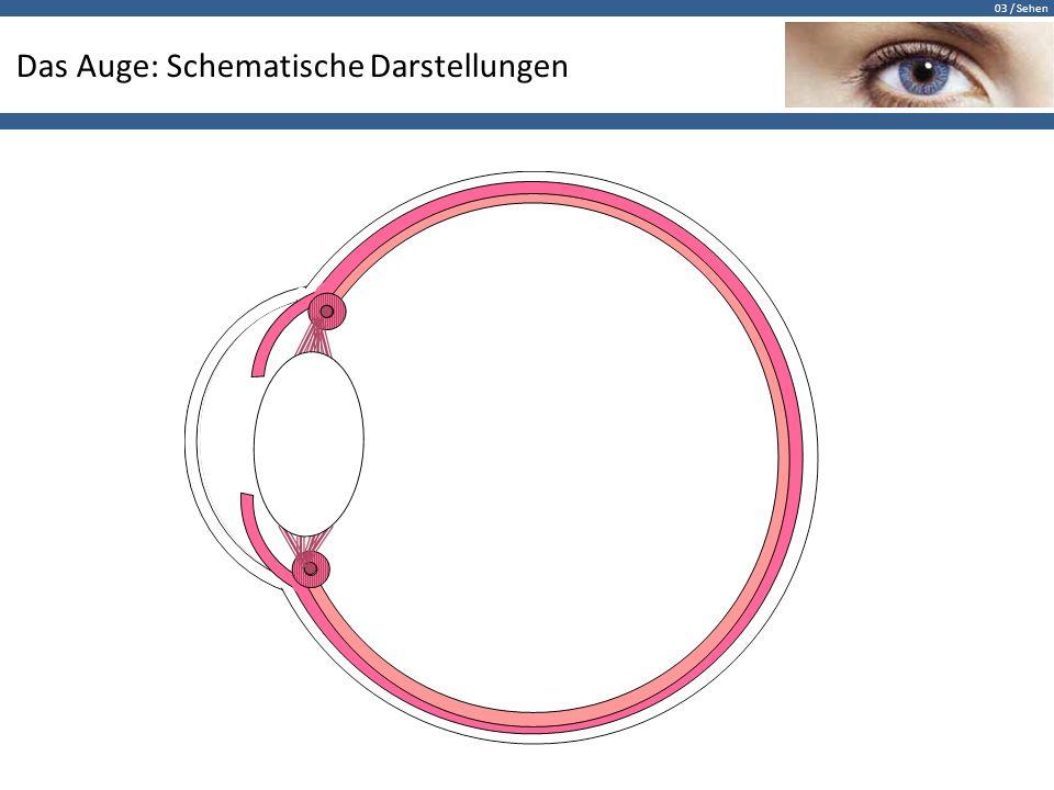 Das Auge: Schematische Darstellungen - ppt herunterladen