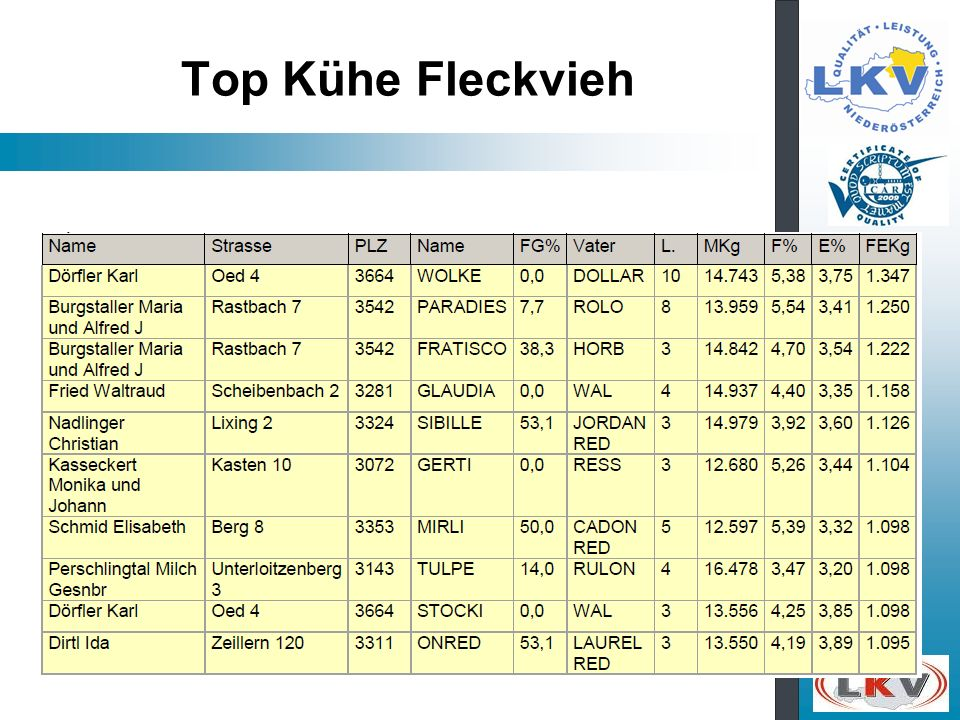 Top Kühe Fleckvieh
